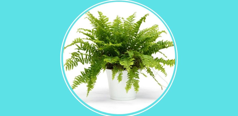 5 plantas pet friendly que debes tener en casa para cuidar de tus mascotas - sabrina-87