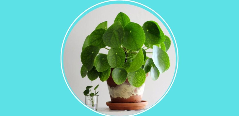 5 plantas pet friendly que debes tener en casa para cuidar de tus mascotas - sabrina-88