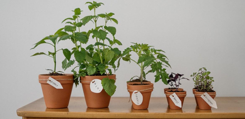 El poder de la canela en tus plantas ¡Será la mejor amiga de tu hogar! - sabrina-7