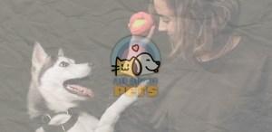 Nuestras marcas mexicanas favoritas de accesorios para mascotas