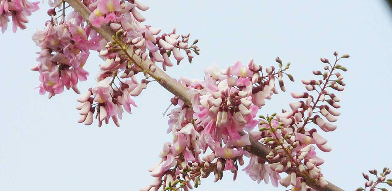 Conoce la flor de cacahuananche: la mejor revelación cosmética, saludable y culinaria
