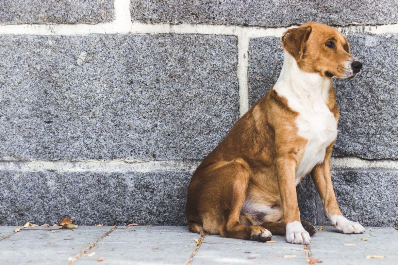 Qué hacer si encuentras un perro abandonado en la calle - perro