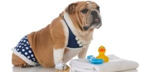 Outfits para tus mascotas este verano ¡A sacar los trajes de baño!