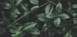 Cuando fertilizar tus plantas según las fases lunares