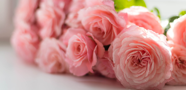 Te decimos la flor que tienes que regalar para cada ocasión