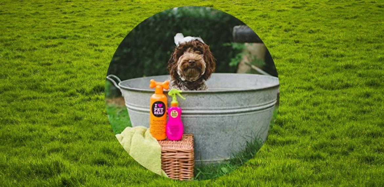 5 formas de limpiar las patitas de tu perro después de un paseo - sabrina-5-1