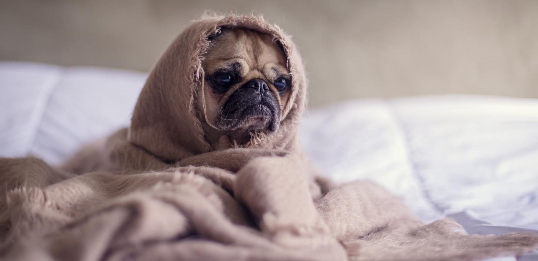 ¿Perros llorando? ¡Te compartimos 6 motivos que lo causan!