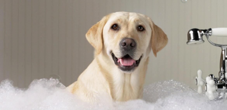 ¿Cómo bañar a tu perro correctamente? ¡5 tips imperdibles! - sabrina