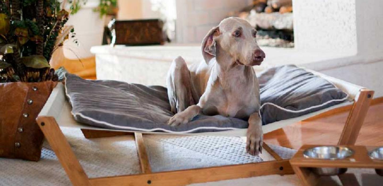 DIY: Crea los mejores muebles para tus mascotas