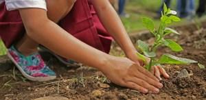 Mega reforestación en Tarango