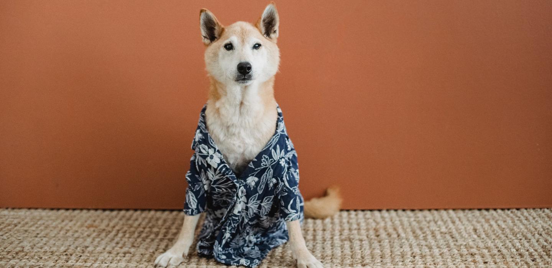 Tips para lavar la ropa de tus mascotas de manera correcta