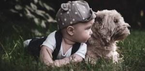 6 trucos para que tu mascota se acostumbre a tu nuevo bebé