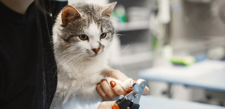5 razones para no cortarle las uñas a tu gato ¡Ojo aquí! - sabrina-88-1