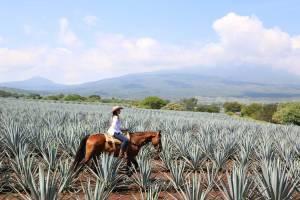 Tequila se convierte en el primer destino turístico inteligente de México y América Latina