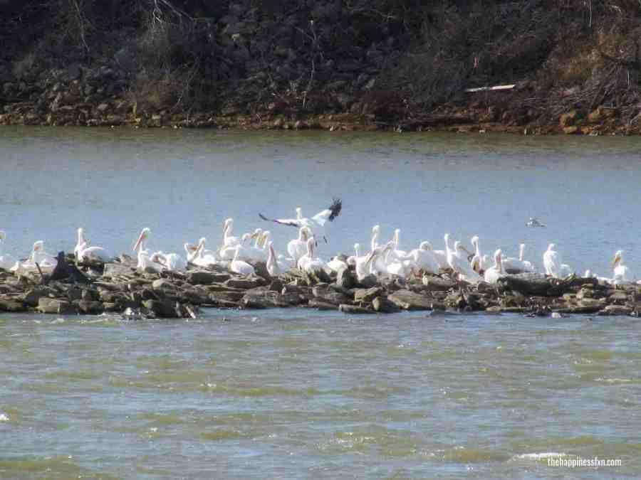 birds-of-oklahoma