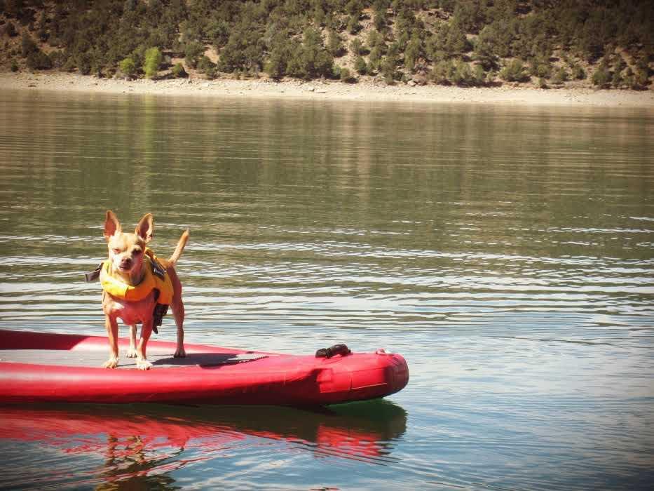 dog-SUP-outdoor-adventures