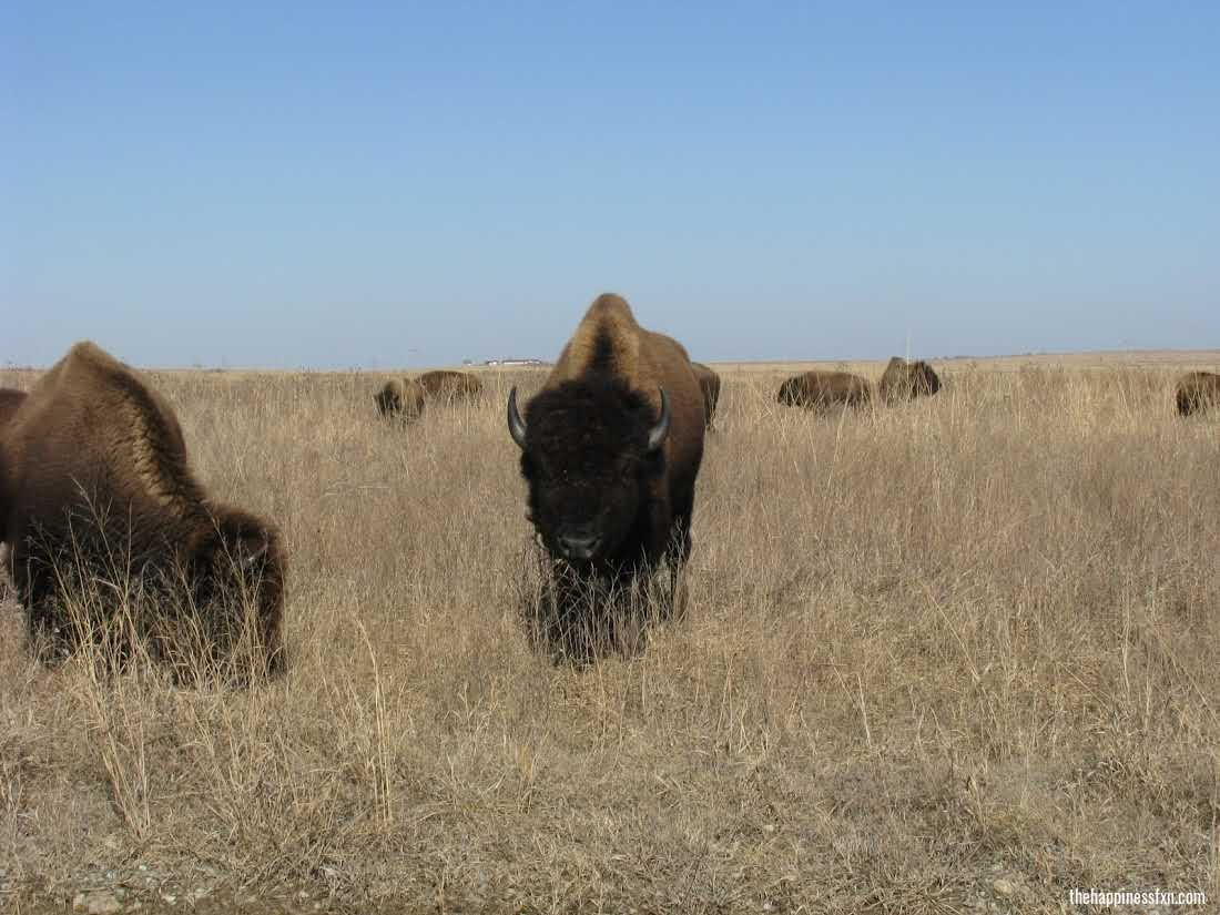 weekend-getaways-near-tulsa-tallgrass-prairie-preserve