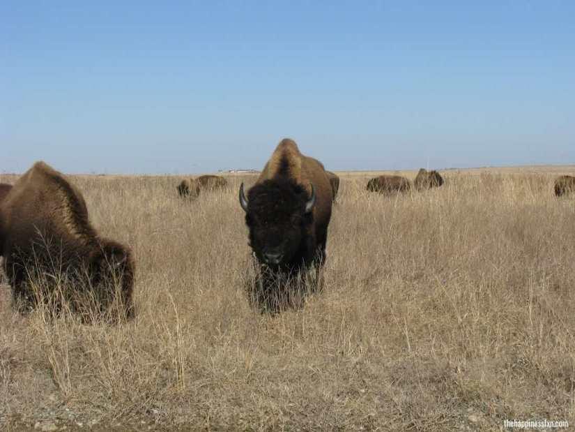tallgrass-prairie-preserve
