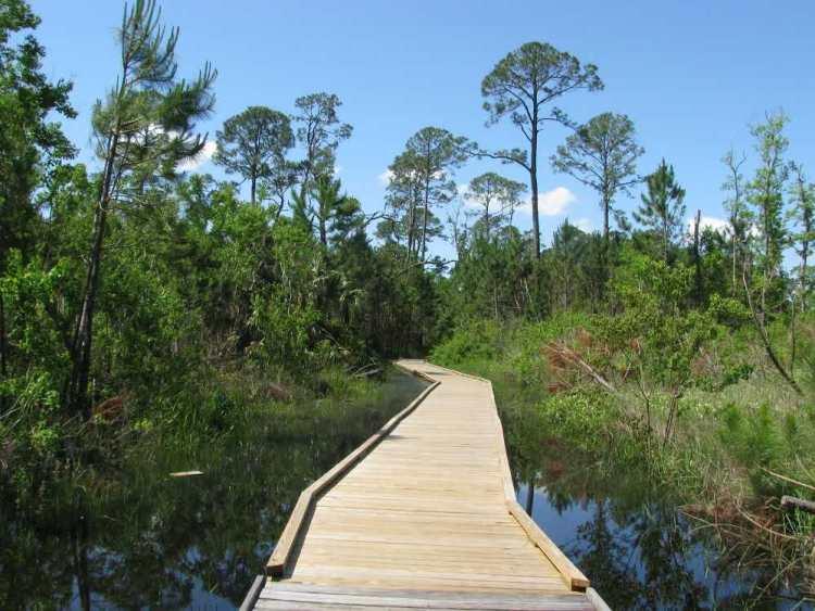 dauphin-island-bird-sanctuary-boardwalk