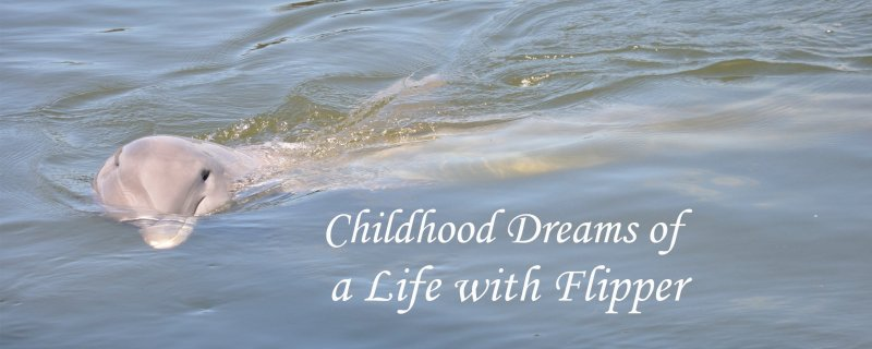 Childhood Dreams of A Life with Flipper