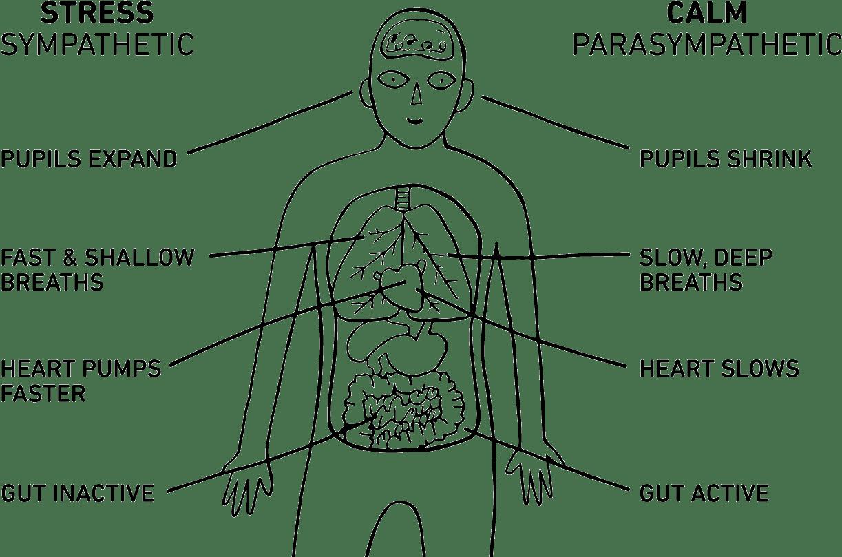 Learn Body