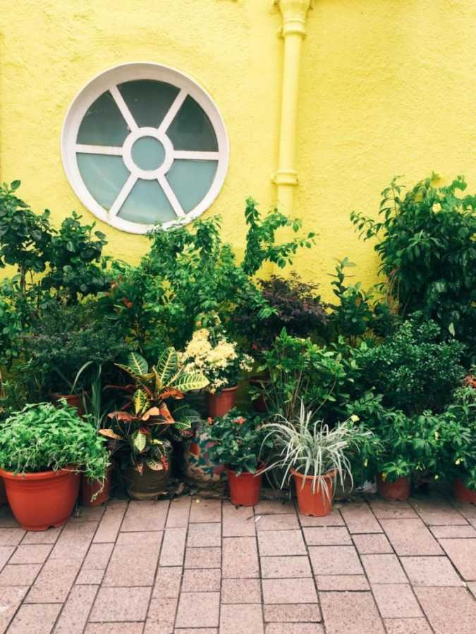 plant pots in front of yellow wall