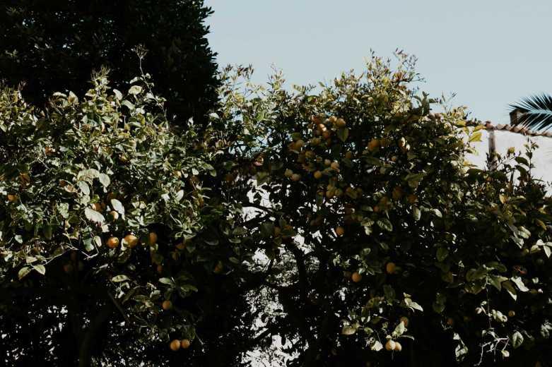 Orangenbaum Garten banys arabs palma de mallorca
