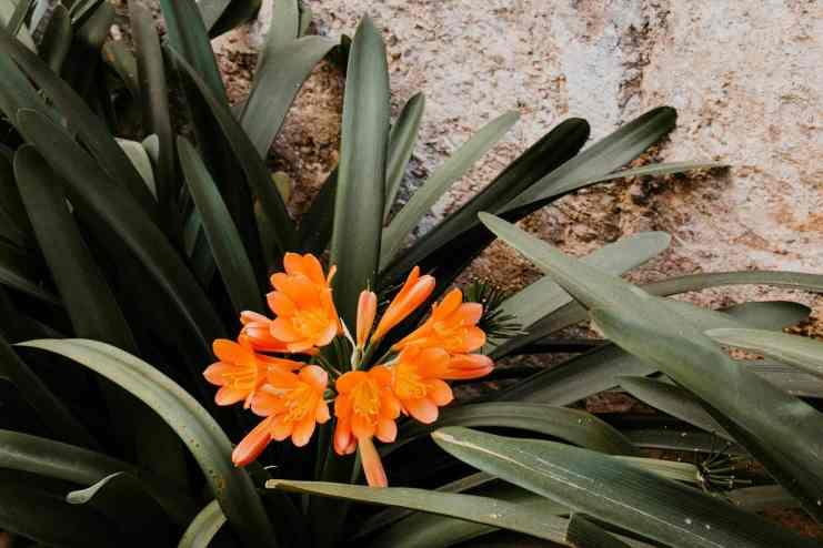 Palma de Mallorca Garten Banys Arabs