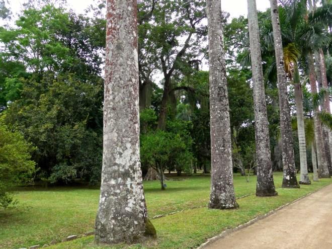 Botanical Garden Rio de Janeiro - Jardim Botanico do RIo de Janeiro - Ancient Palm Trees