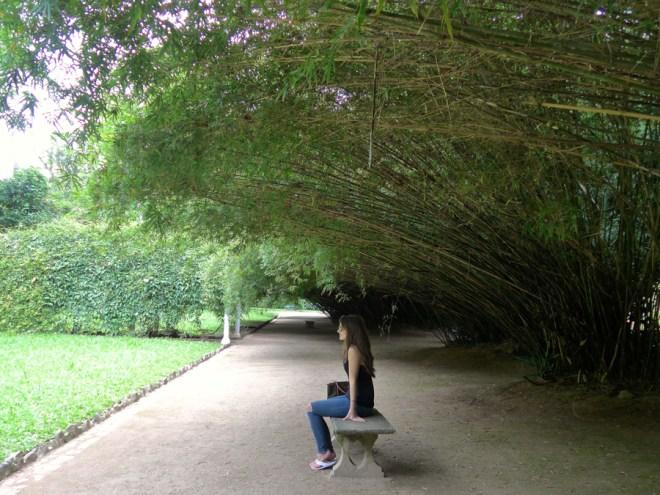 Botanical Garden Rio de Janeiro - Jardim Botanico do RIo de Janeiro - Bamboo canopy
