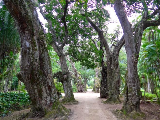 Botanical Garden Rio de Janeiro - Jardim Botanico do RIo de Janeiro - Path through ancient trees