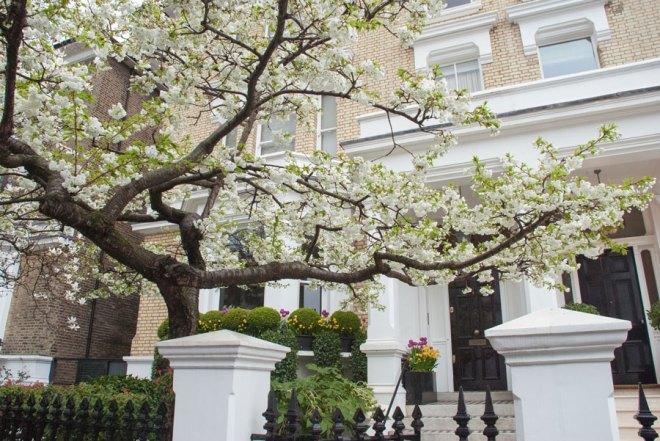 The-Little-Boltons-Kensington-Blossom-London