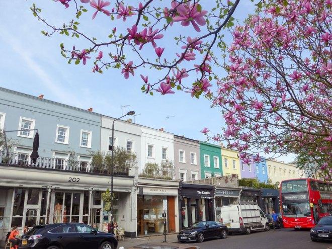 Westbourne-Grove-Notting-Hill-London-Magnolia-Blossom