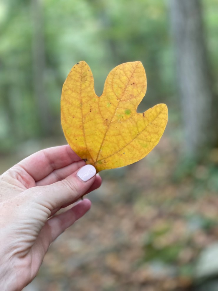 yellow leaf from fall hike
