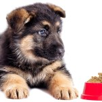 Choosing The Best Food For German Shepherd Puppies