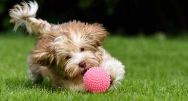 Image result for dog playing with squeaky toy