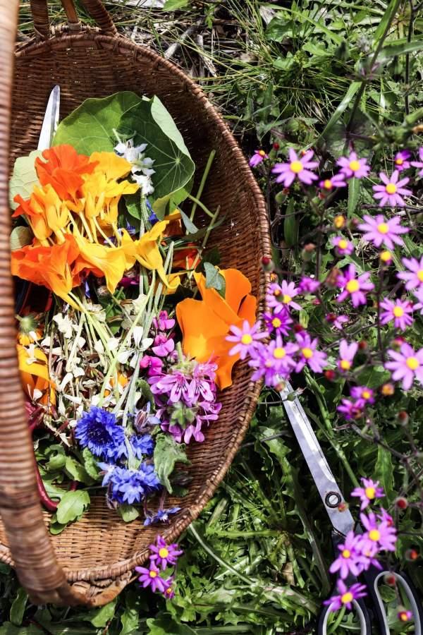 Veld and Sea Spring Flower Workshop