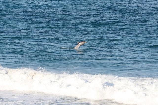 dolphins at Mdumbi