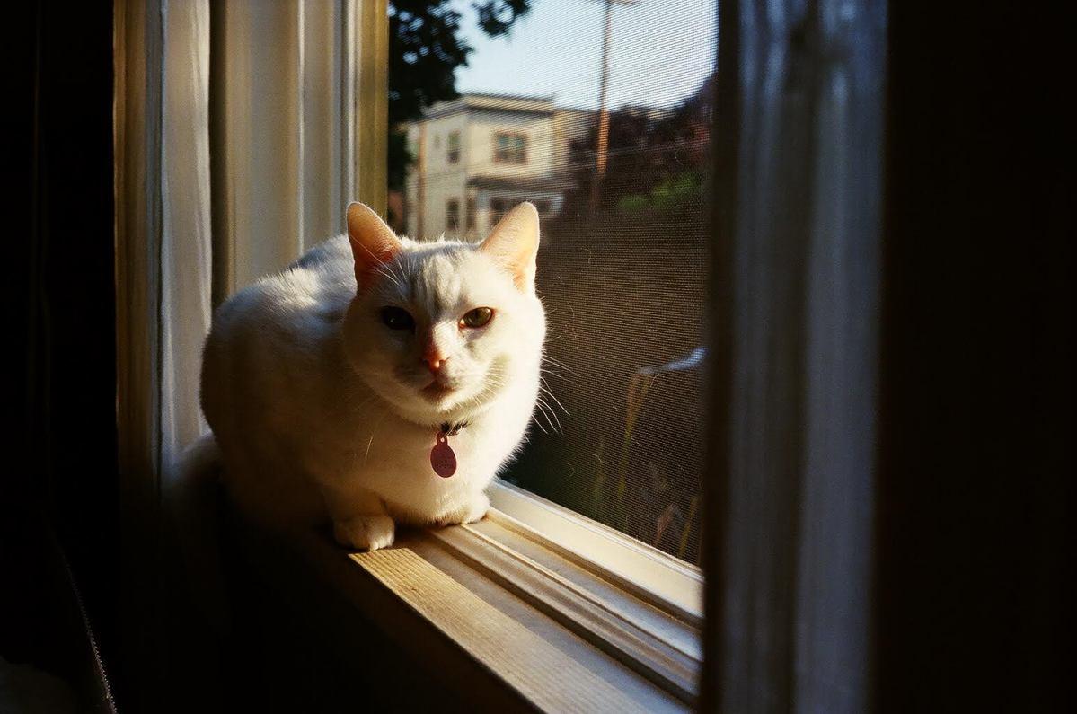 Local Cat Seems Unfazed by Trump Presidency