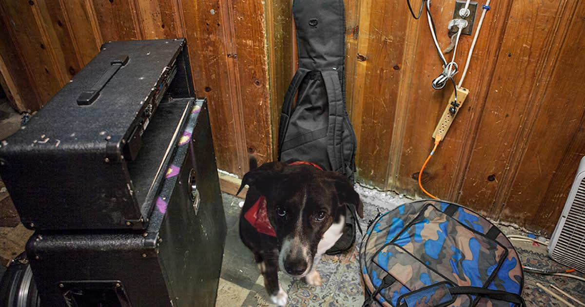 Dog At Basement Show Stealing Attention Away From Bands