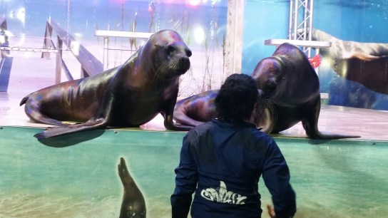 We missed the show but were able to catch one of the sea lions stealing a kiss from his instructor.