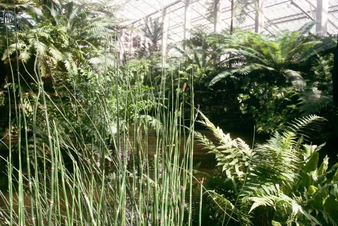 Garfield Park Conservatory-Chicago-the-haute-seeker
