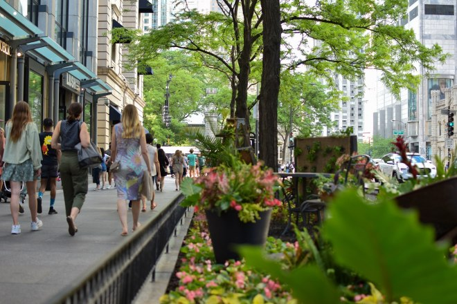 Magnificent Mile Chicago in Seek Like a Local with Pooja