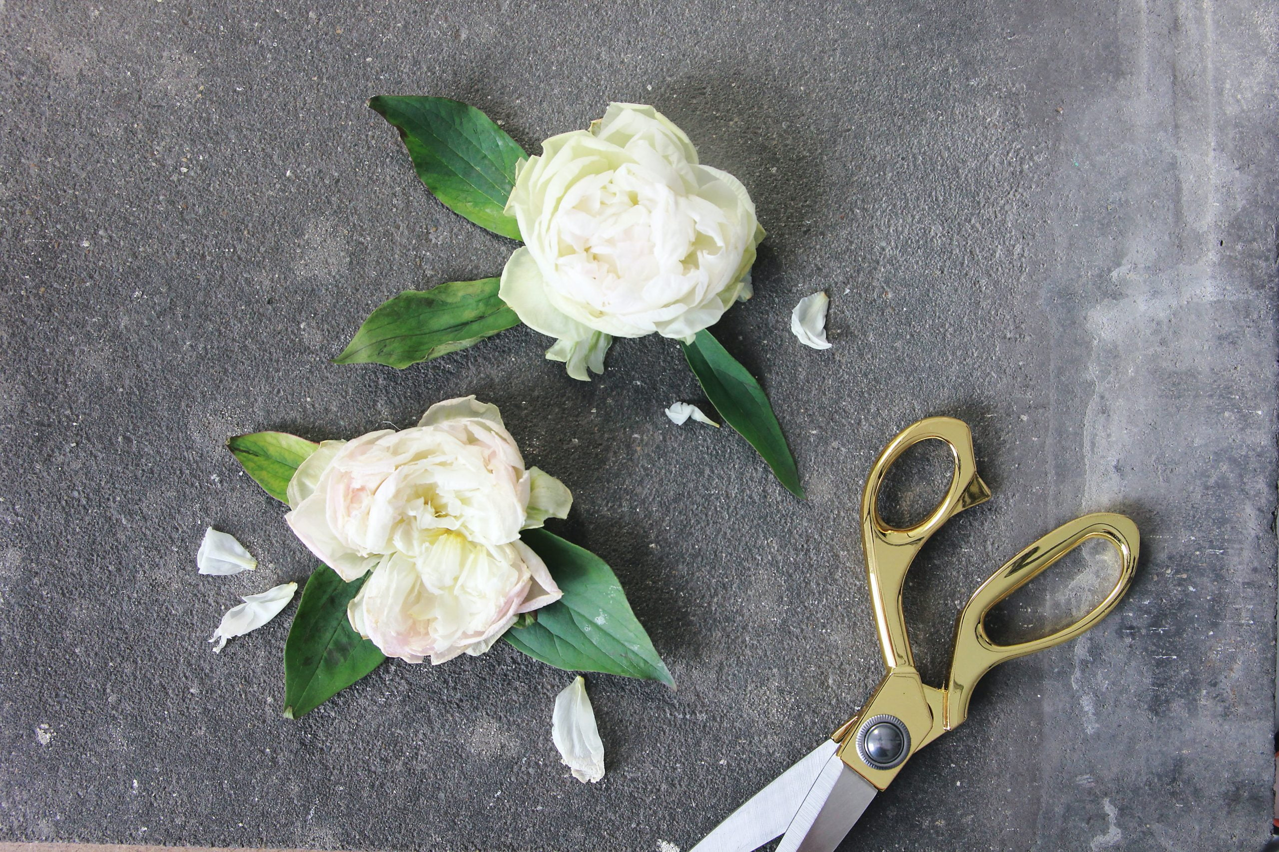 two white roses on a black table next to a pair of pruning sheers