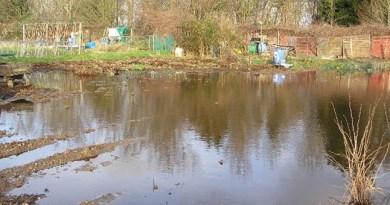 Councillors visit Bretons Farm allotments.