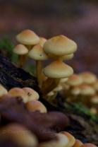 Fungus (10)