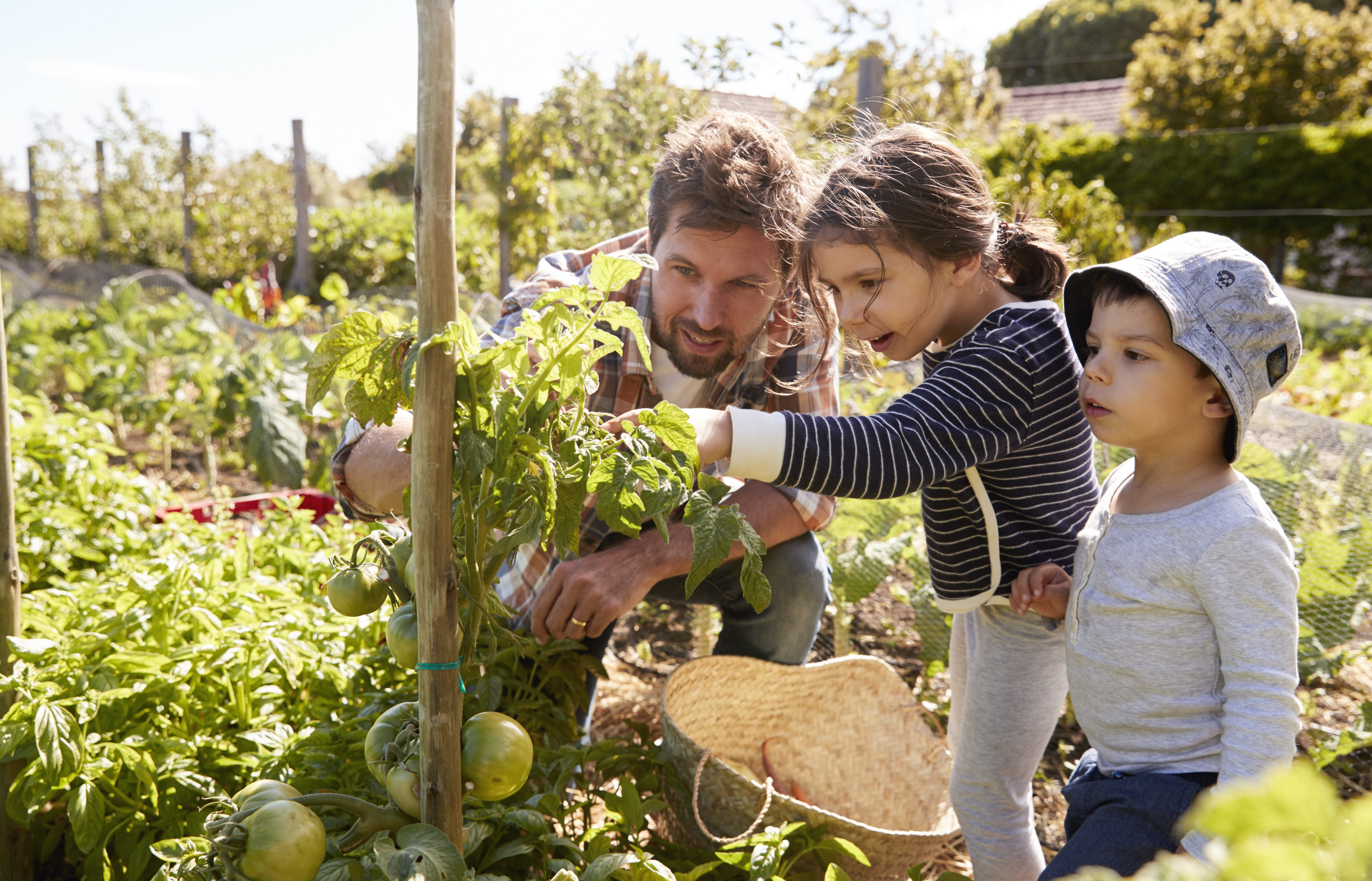 Examining community and consumer food environments for children: An urban-suburban-rural comparison in Southwestern Ontario