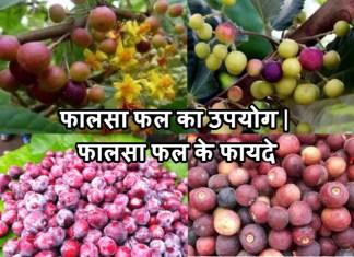 फालसा फल का उपयोग | फालसा फल के फायदे | Falsa Fruit Khane Ke Fayade