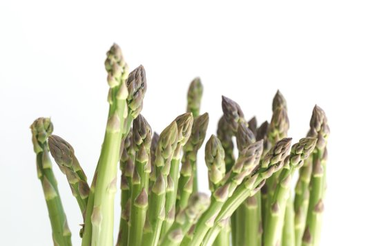 asparagus-on-white_4460x4460