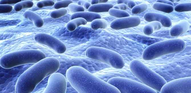 blog_bacteria